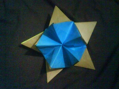 revealed star flower open