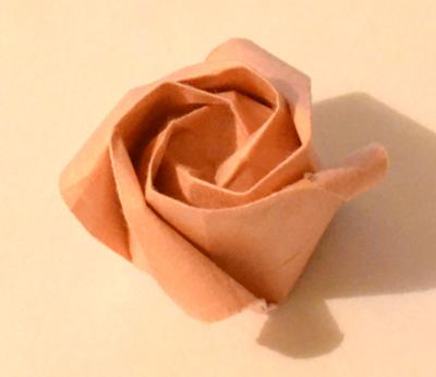 This is an example of a Kawasaki rose